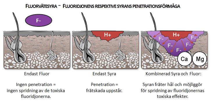 Fluorvätesyra Syran fräter giftiga fluoridjonen binder fluoridjoner kalcium exponering brännande vävnader brännskada koncentrationer hudrodnad behandla